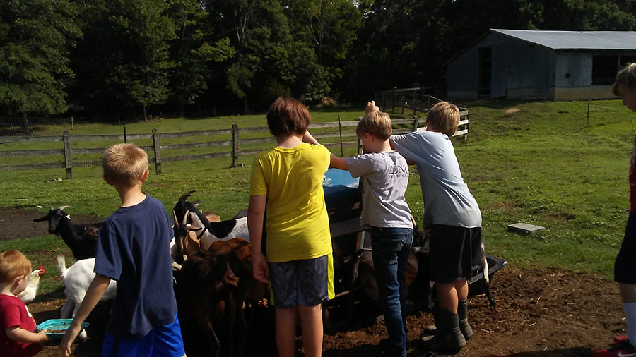 Children caring for the goats