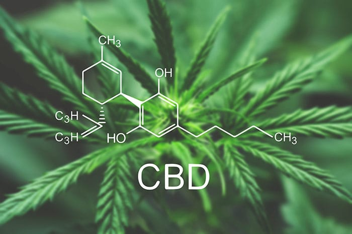 Chemical Makeup of CBD Oil in white over a hemp plant