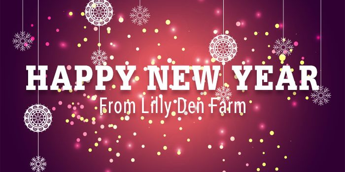 Happy New Year From Lilly Den Farm White Type Over Red Christmas Background