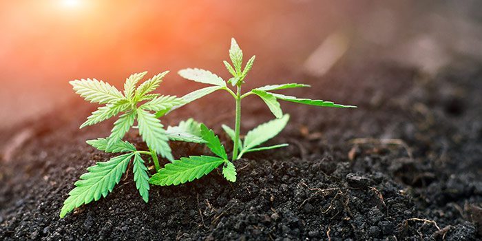 HempWorx CBD Business Opportunity: Tips To Starting Your Own CBD Business
