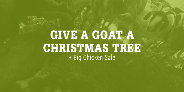 White Serif Type Laying Over Green-toned Image Of Goats